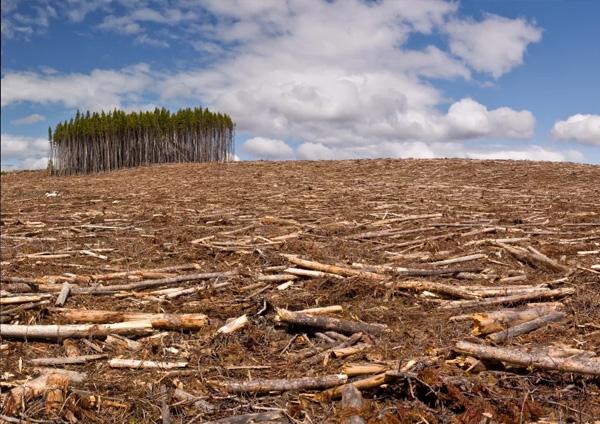 Alviero Martini: «Rispettiamo l'ambiente»