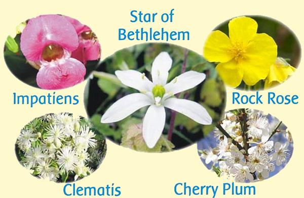 Rescue Remedy il rimedio di emergenza dei fiori di Bach