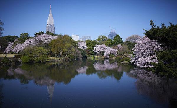 Tre indirizzi insoliti per ammirare la fioritura dei ciliegi a Tokyo