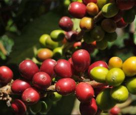 Il Perù seguendo il profumo di caffè: un percorso per risvegliare i cinque sensi