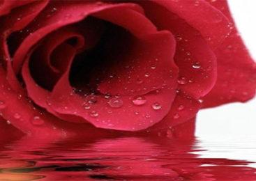 Benessere: Idrolato di rosa, tonificante e antiage