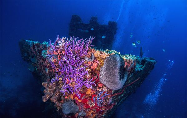 Aruba, la capitale dei relitti sottomarini dei Caraibi