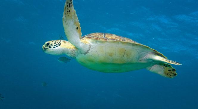 Aruba: L'Isola dei Caraibi lancia nuove iniziative per salvaguardare il pianeta