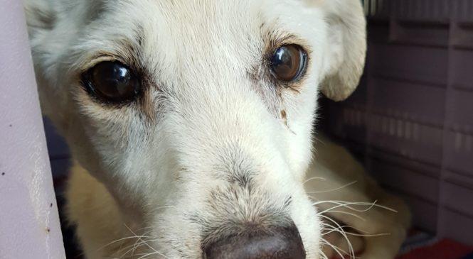 Il mio cane è volato sul ponte, adesso dedico la mia vita agli animali