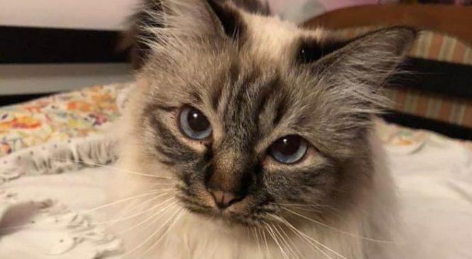 17 Febbraio- Giornata nazionale del gatto