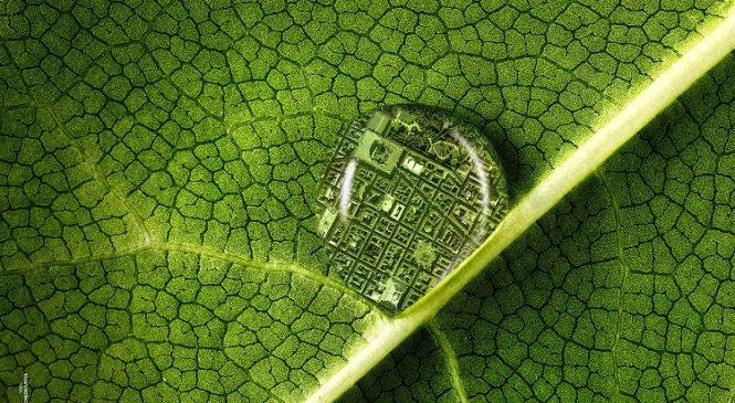 Plant Health 2020- La salute delle piante
