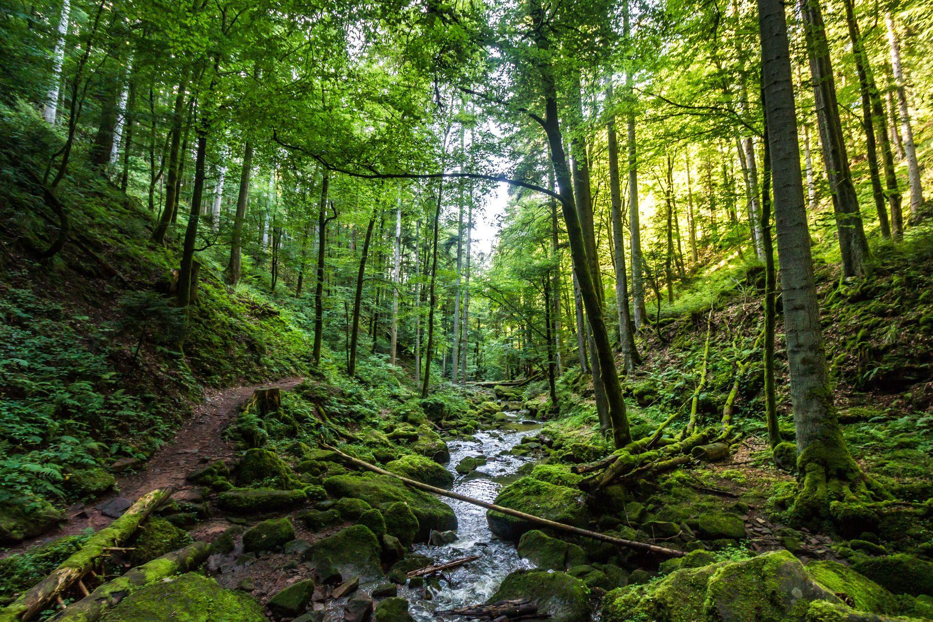Alla scoperta della natura, storia e cultura del Baden-Württemberg