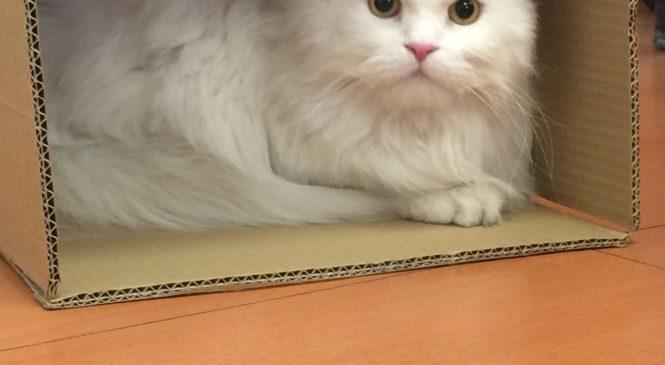Giornata internazionale del gatto- Stop al riciclo delle scatole di cartone