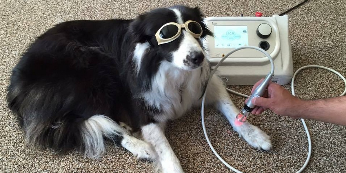 "Boom per i ""Dog Sport"""