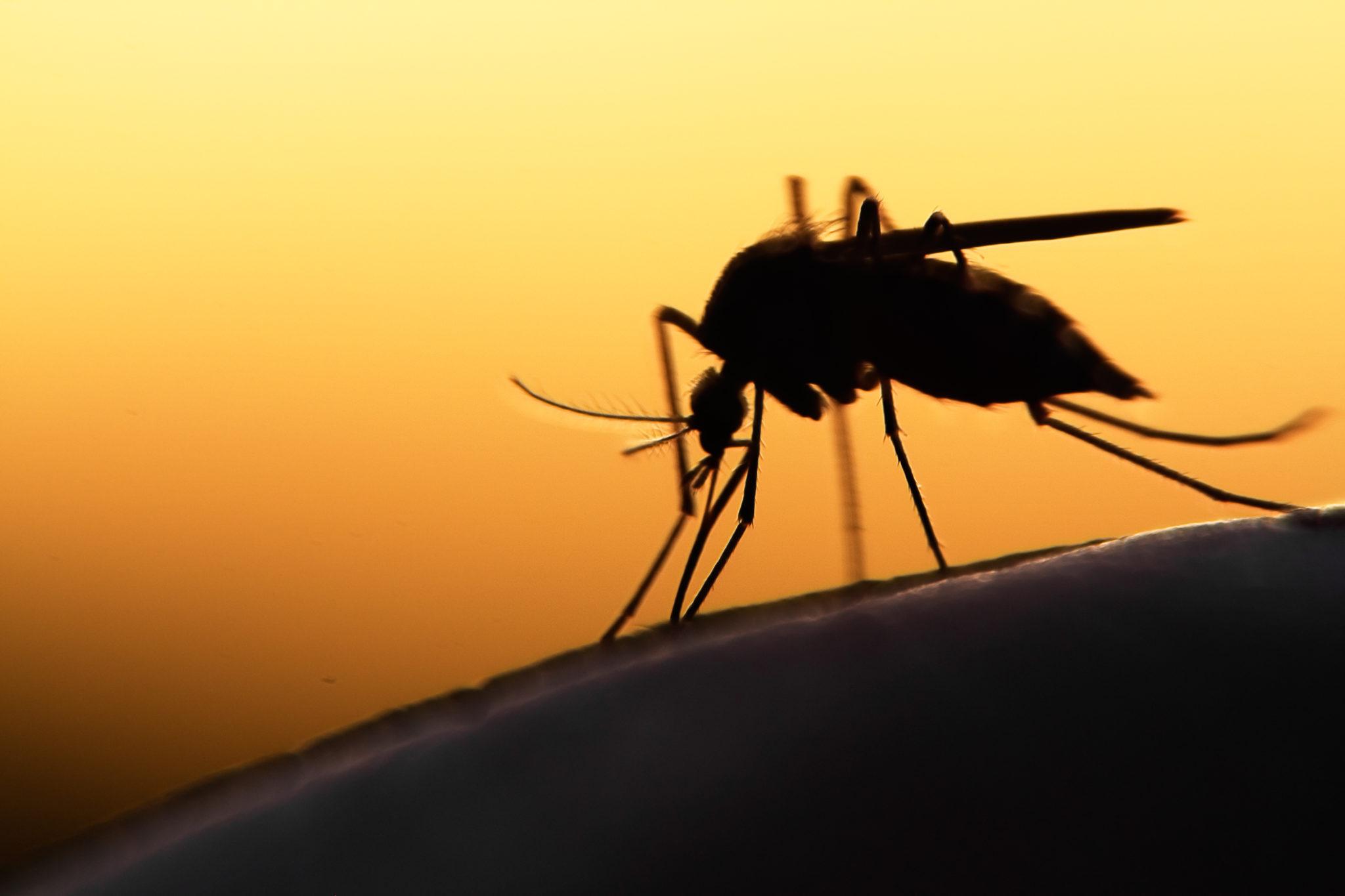 World Mosquito Day: tutte le malattie trasmesse dalle zanzare