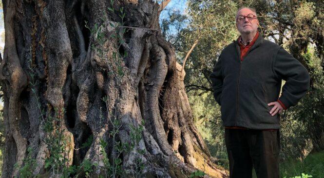 Edoardo Raspelli- In Calabria tra gli olivi ciclopici