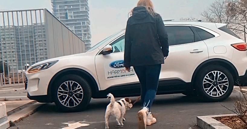 Taxi dog- Il regalo di Harmonia e Ford per gli amici a 4 zampe!