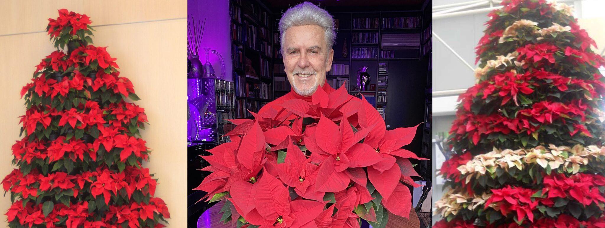 Alviero Martini- I fiori di Natale