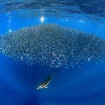 8 Giugno World Ocean Day- Giornata Mondiale dell'Oceano