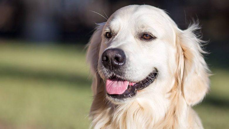 Dog Film Festival- Vincitori e premi speciali della prima edizione