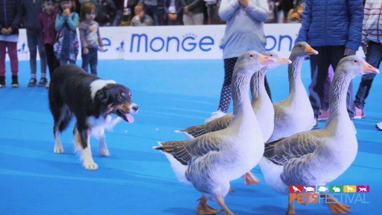 Petsfestival-L'amore per gli animali si dimostra più forte del covid!