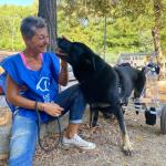"""Adozione del cuore- Chico, cane disabile: cerca una famiglia """"speciale!"""